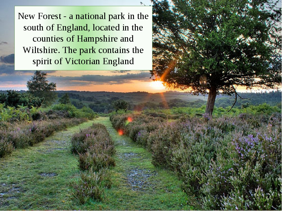 New Forest - a national park in the south of England, located in the counties of Hampshire and Wiltshire. The park contains the spirit of Victorian...