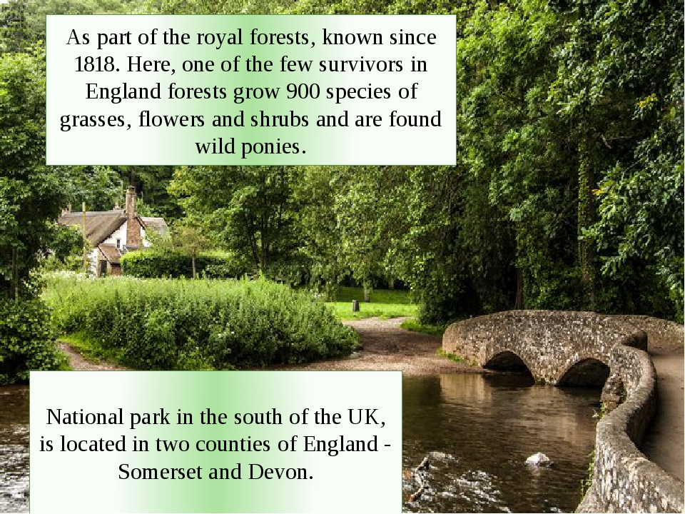 As part of the royal forests, known since 1818. Here, one of the few survivors in England forests grow 900 species of grasses, flowers and shrubs a...