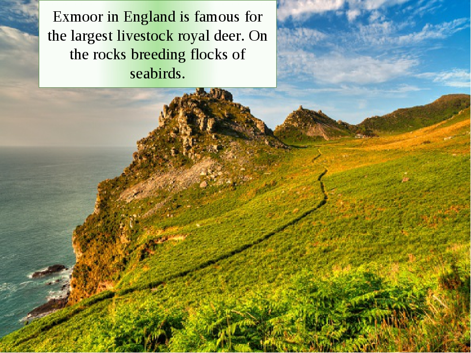 Exmoor in England is famous for the largest livestock royal deer. On the rocks breeding flocks of seabirds.