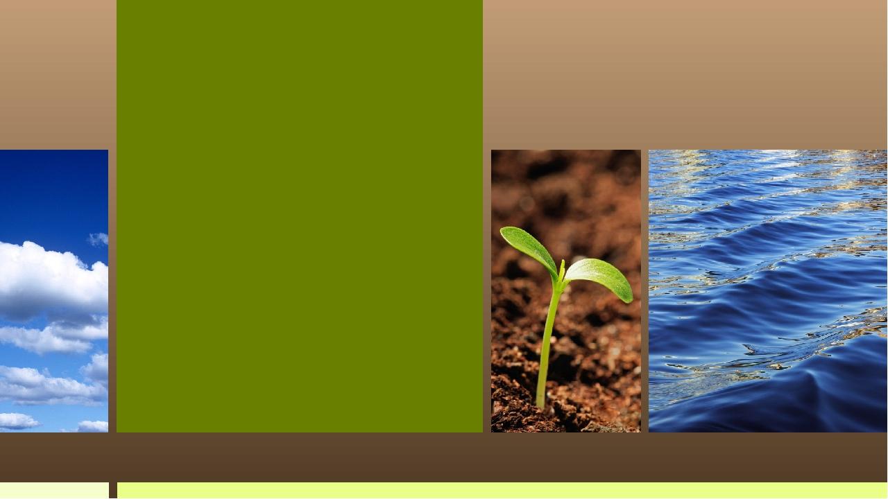 Вплив глобальних кліматичних змін на біогеоценоз нашої місцевості