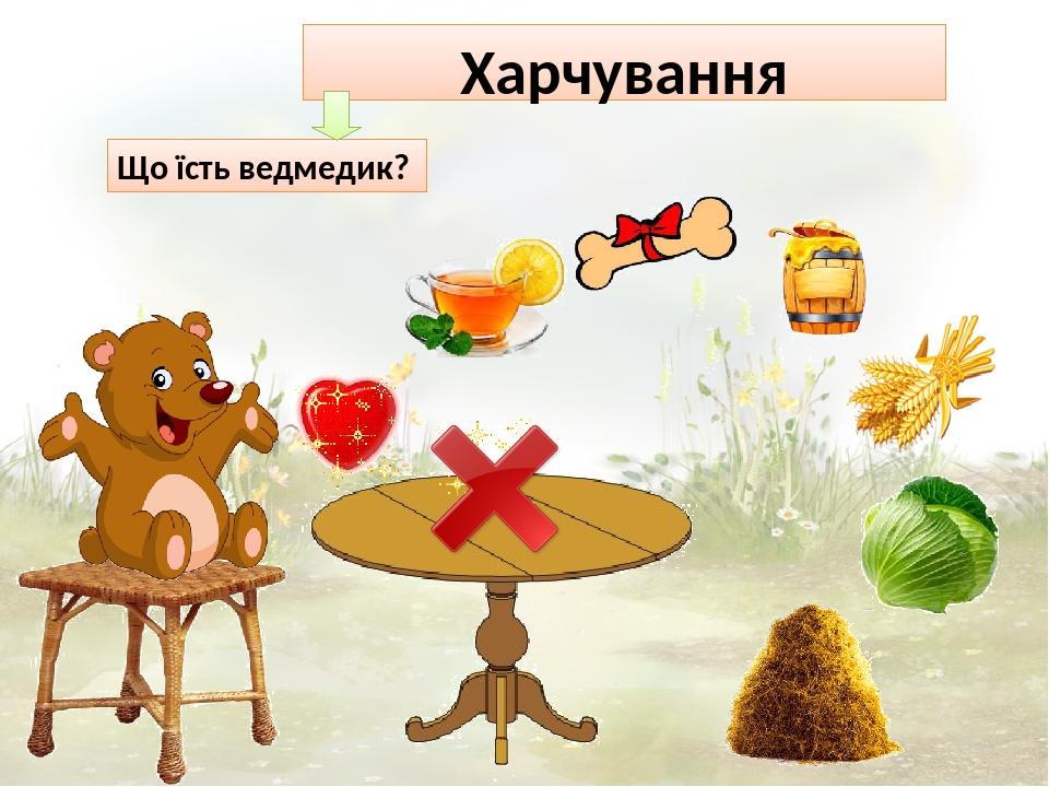 Харчування Що їсть ведмедик?