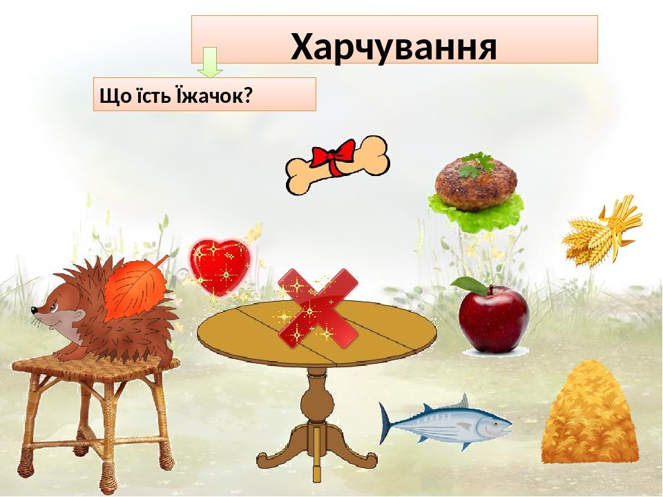 Харчування Що їсть Їжачок?