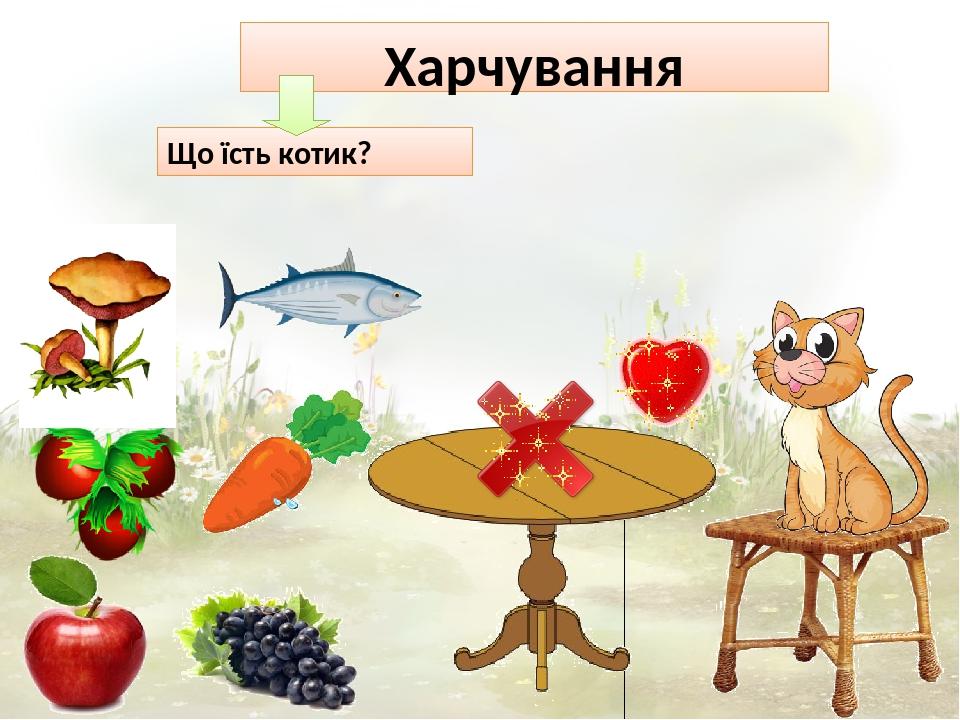 Харчування Що їсть котик?