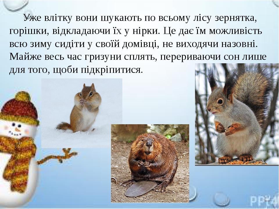 Уже влітку вони шукають по всьому лісу зернятка, горішки, відкладаючи їх у нірки. Це дає їм можливість всю зиму сидіти у своїй домівці, не виходячи...