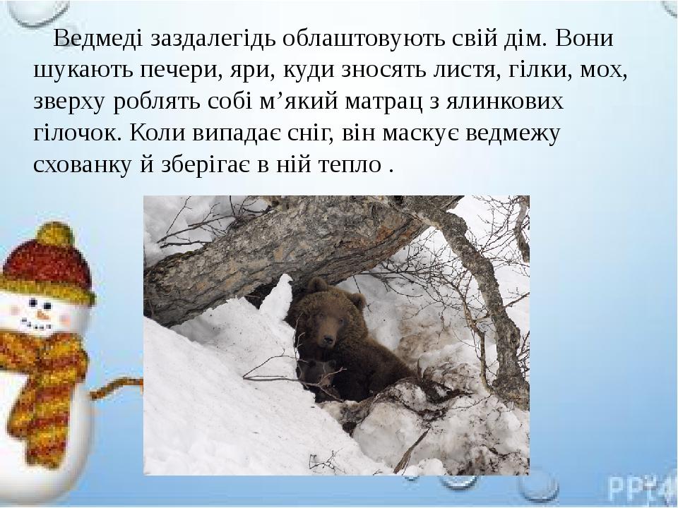 Ведмеді заздалегідь облаштовують свій дім. Вони шукають печери, яри, куди зносять листя, гілки, мох, зверху роблять собі м'який матрац з ялинкових ...