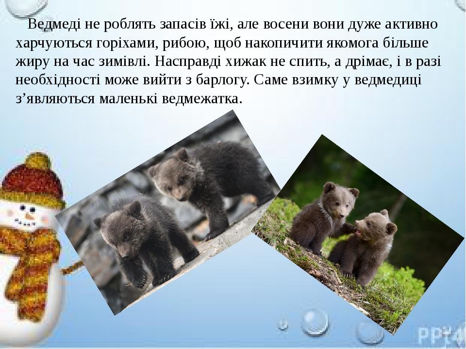 Ведмеді не роблять запасів їжі, але восени вони дуже активно харчуються горіхами, рибою, щоб накопичити якомога більше жиру на час зимівлі. Насправ...