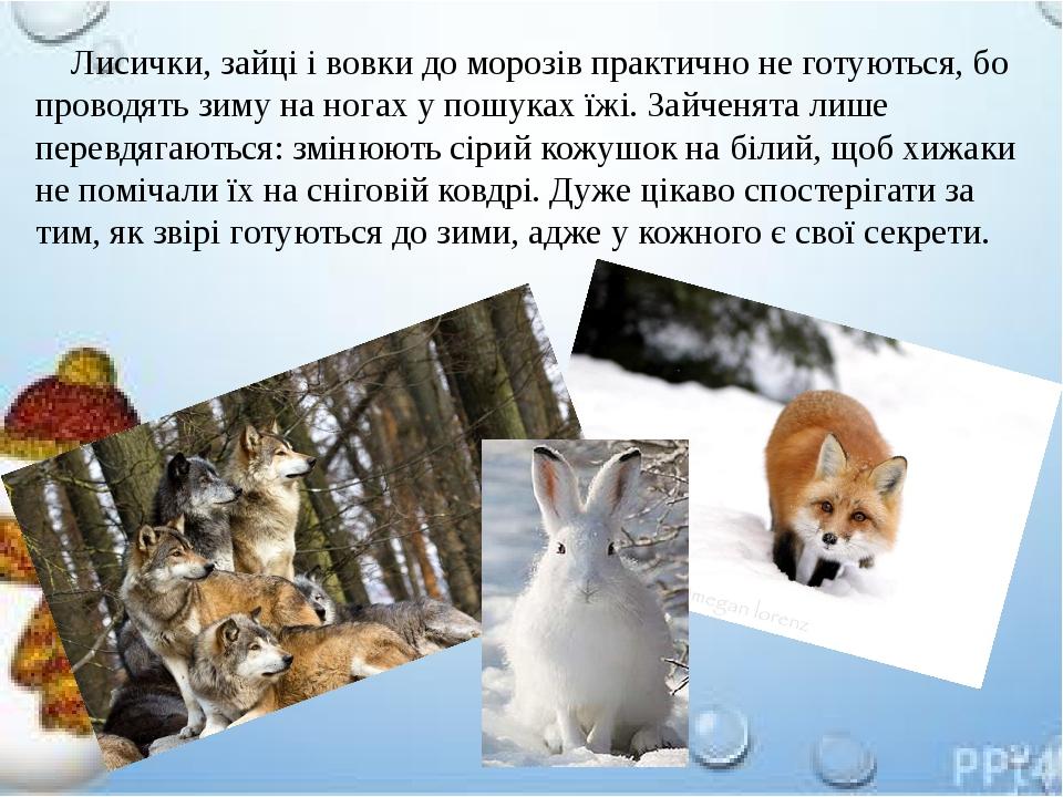 Лисички, зайці і вовки до морозів практично не готуються, бо проводять зиму на ногах у пошуках їжі. Зайченята лише перевдягаються: змінюють сірий к...
