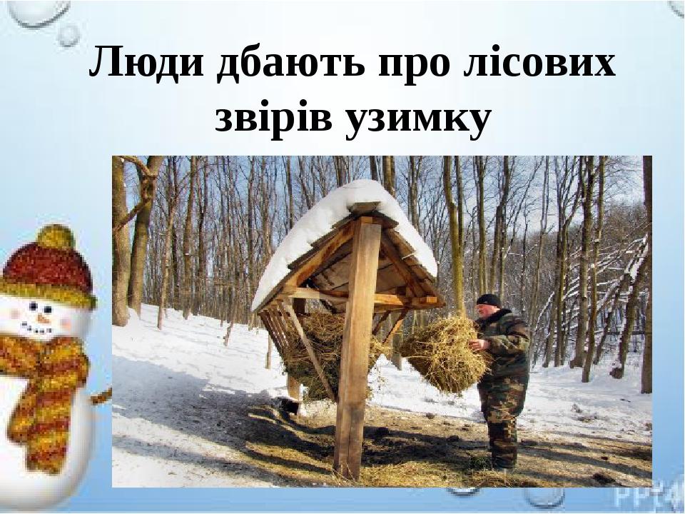 Люди дбають про лісових звірів узимку