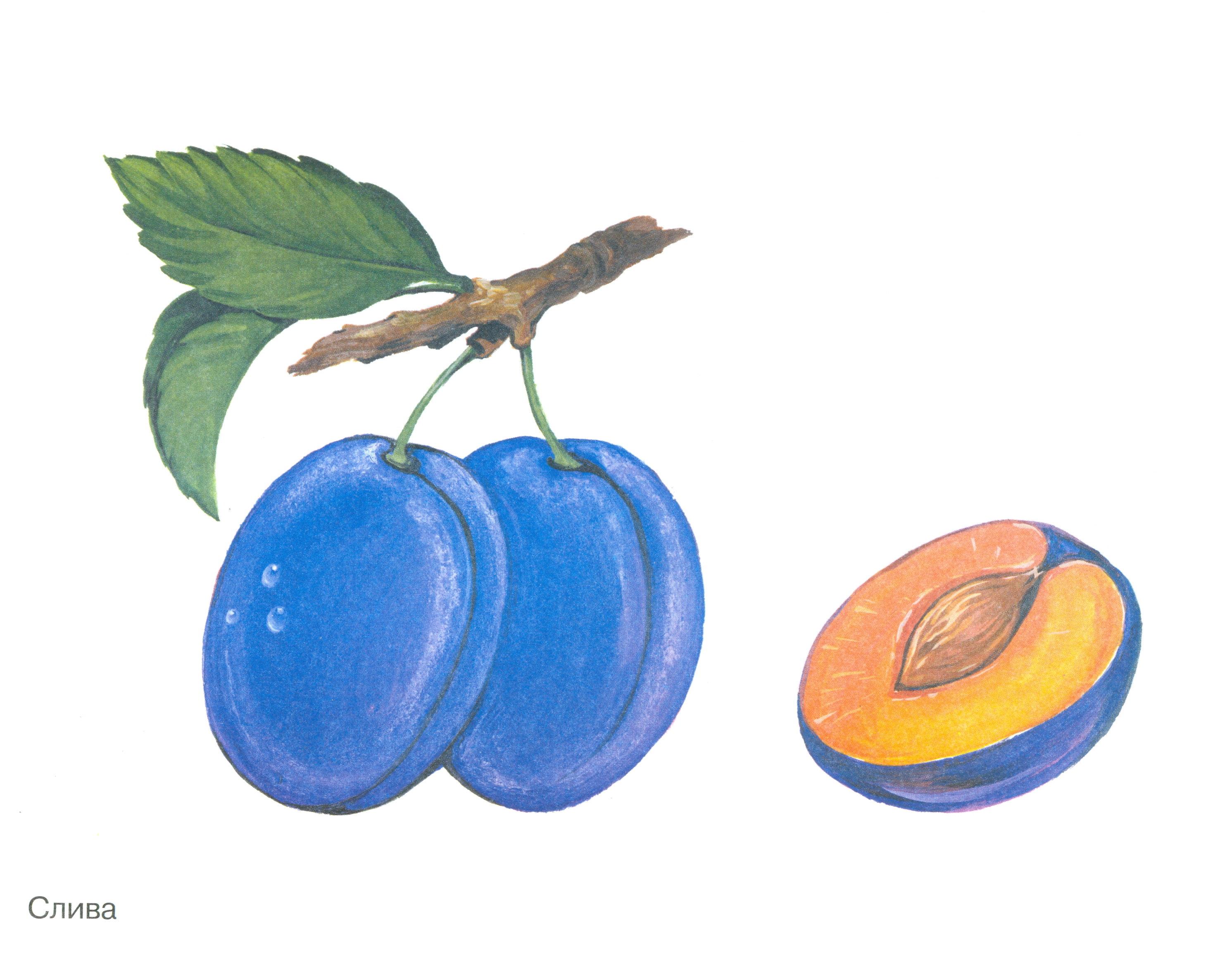 Картинки фруктов для детей нарисованные