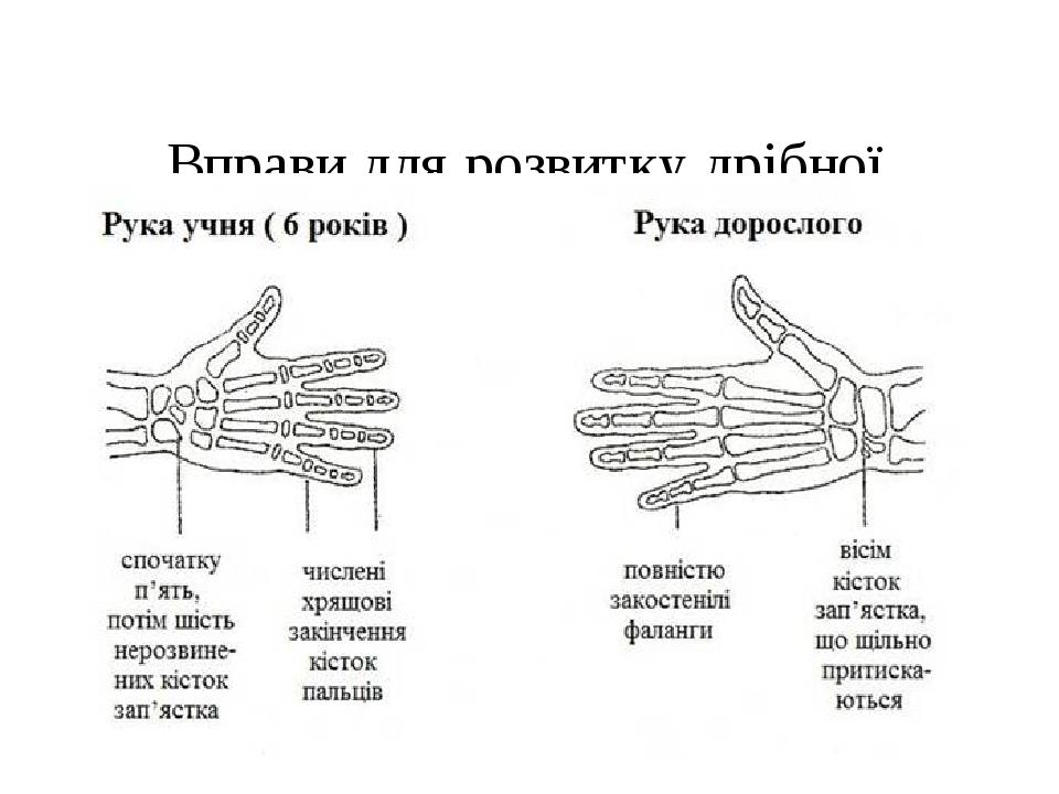 Вправи для розвитку дрібної моторики рук