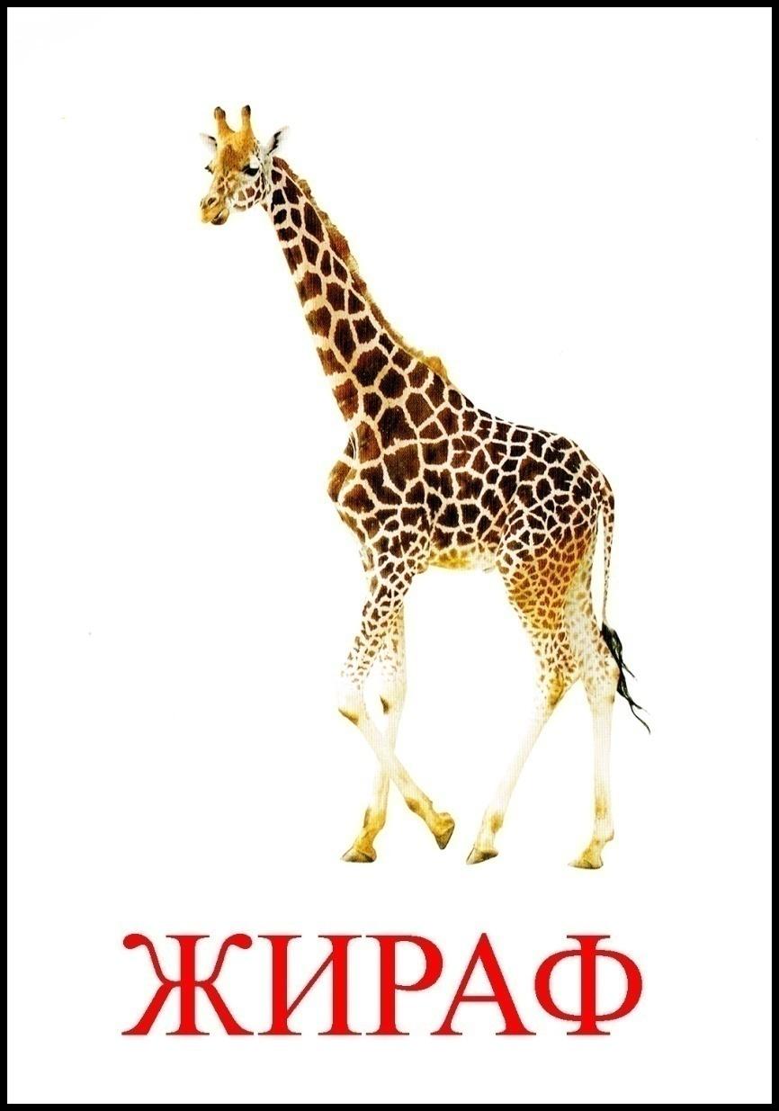 жираф картинка с надписью крылов бодибилдинг, бизнес
