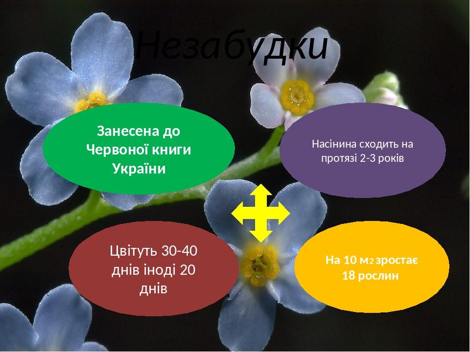 Незабудки Занесена до Червоної книги України Насінина сходить на протязі 2-3 років Цвітуть 30-40 днів іноді 20 днів На 10 м2 зростає 18 рослин