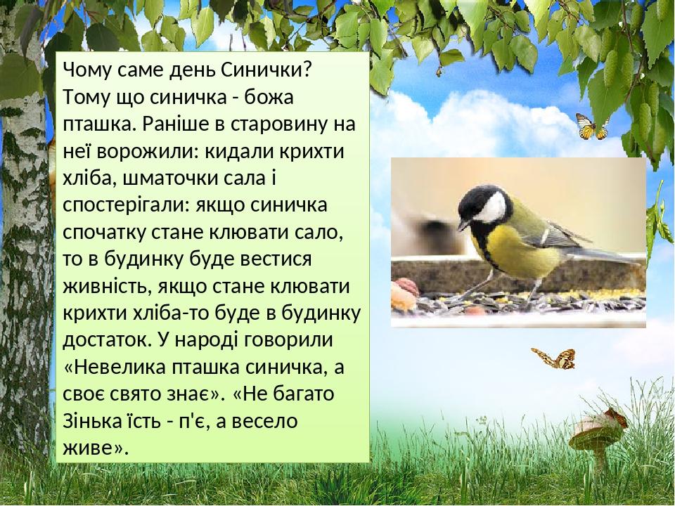 Чому саме день Синички? Тому що синичка - божа пташка. Раніше в старовину на неї ворожили: кидали крихти хліба, шматочки сала і спостерігали: якщо ...