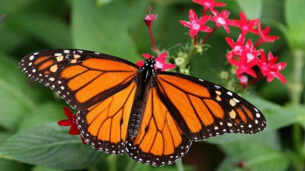 "Стаття ""Де живуть метелики"""