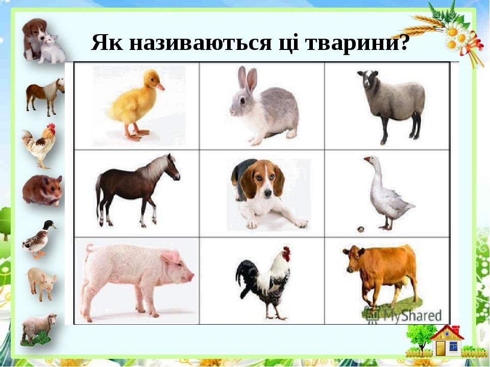 Як називаються ці тварини?