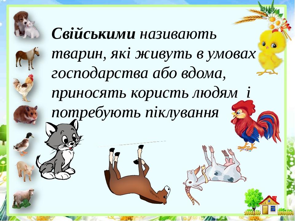 Свійськими називають тварин, які живуть в умовах господарства або вдома, приносять користь людям і потребують піклування
