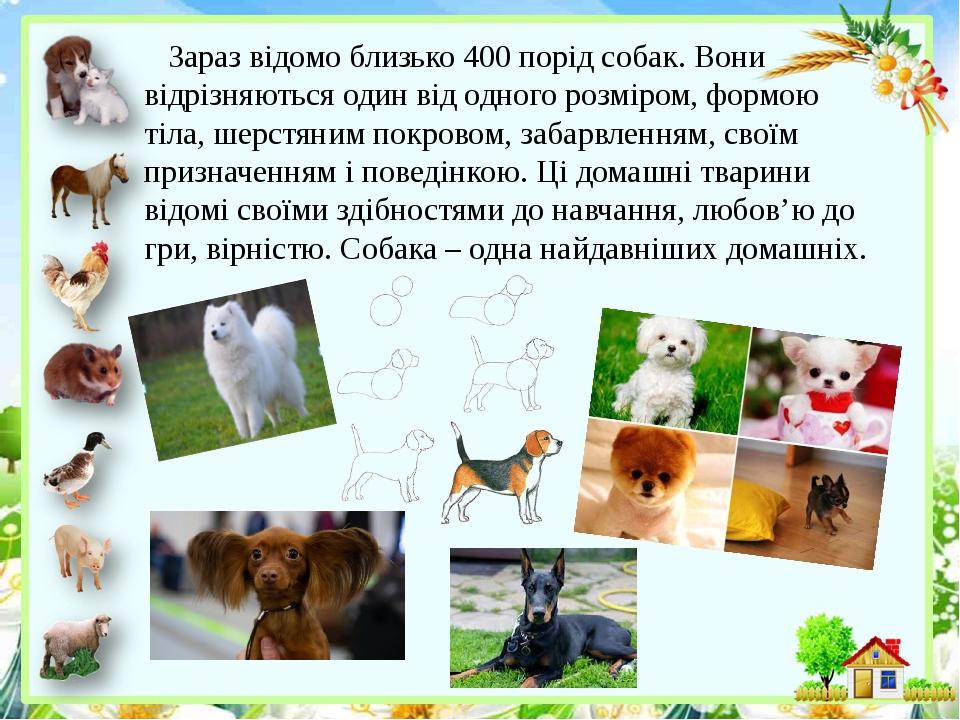 Зараз відомо близько 400 порід собак. Вони відрізняються один від одного розміром, формою тіла, шерстяним покровом, забарвленням, своїм призначення...