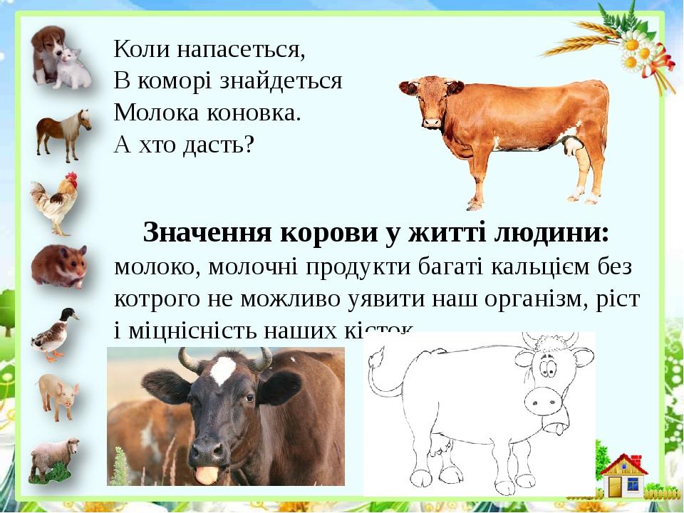 Коли напасеться, В коморі знайдеться Молока коновка. А хто дасть? Значення корови у житті людини: молоко, молочні продукти багаті кальцієм без ...
