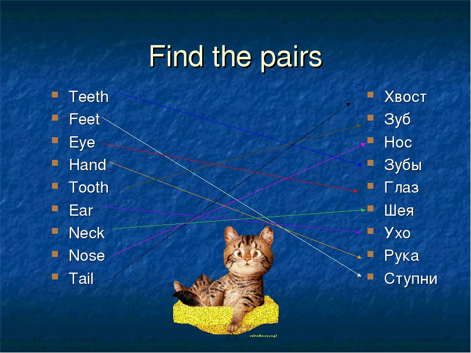 Find the pairs Teeth Feet Eye Hand Tooth Ear Neck Nose Tail Хвост Зуб Нос Зубы Глаз Шея Ухо Рука Ступни