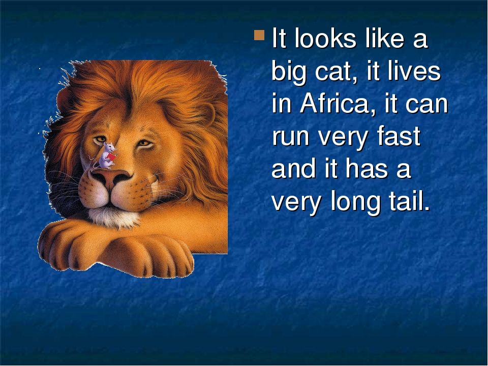 It looks like a big cat, it lives in Africa, it can run very fast and it has a very long tail.