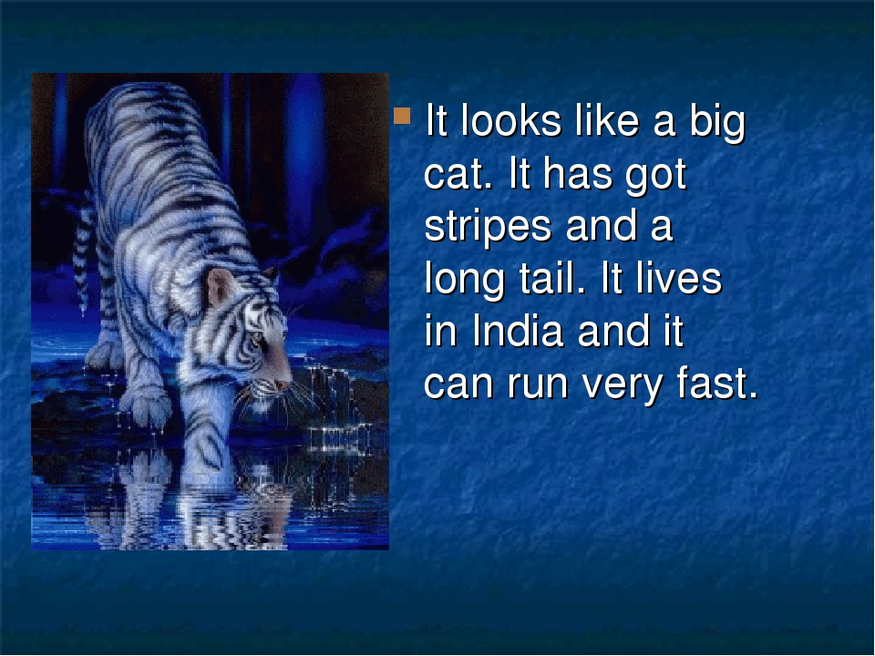 It looks like a big cat. It has got stripes and a long tail. It lives in India and it can run very fast.