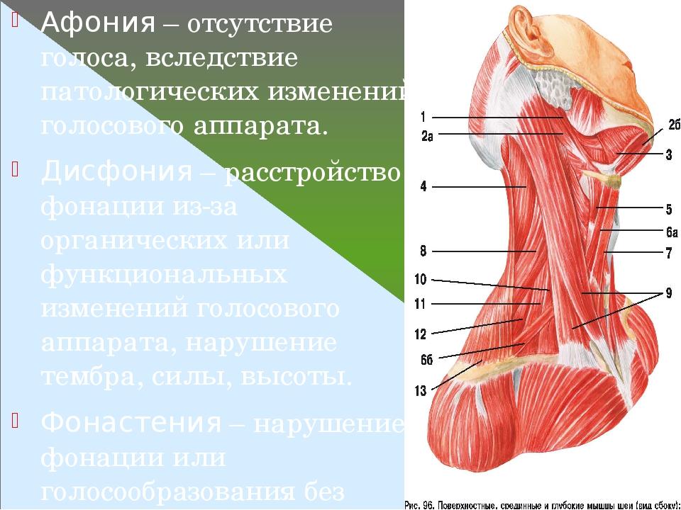 Афония – отсутствие голоса, вследствие патологических изменений голосового аппарата. Дисфония – расстройство фонации из-за органических или функцио...