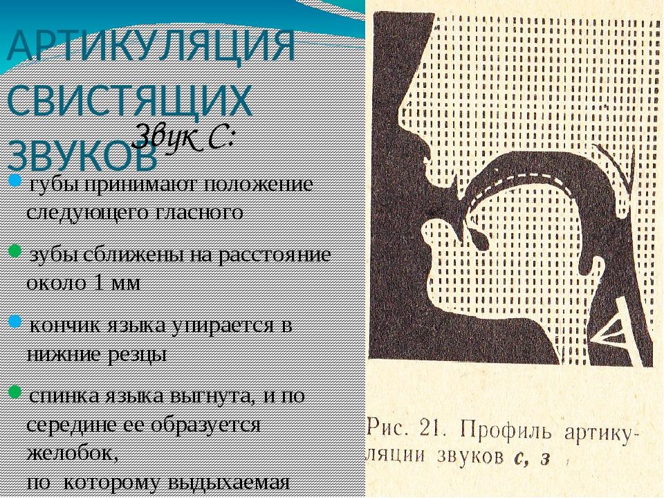 АРТИКУЛЯЦИЯ СВИСТЯЩИХ ЗВУКОВ Звук С: губы принимают положение следующего гласного зубы сближены на расстояние около 1 мм кончик языка упирается в н...