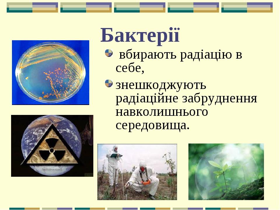 Бактерії вбирають радіацію в себе, знешкоджують радіаційне забруднення навколишнього середовища.