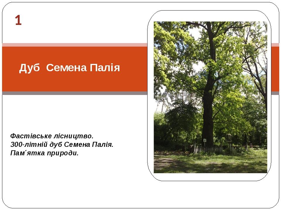 1 Фастівське лісництво. 300-літній дуб Семена Палія. Пам΄ятка природи. Дуб Семена Палія