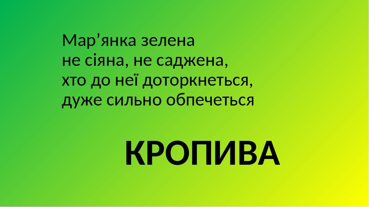 Мар'янка зелена не сіяна, не саджена, хто до неї доторкнеться, дуже сильно обпечеться КРОПИВА