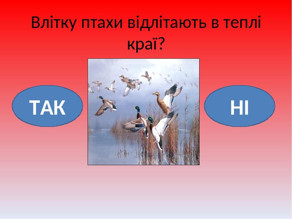 Влітку птахи відлітають в теплі краї? НІ ТАК