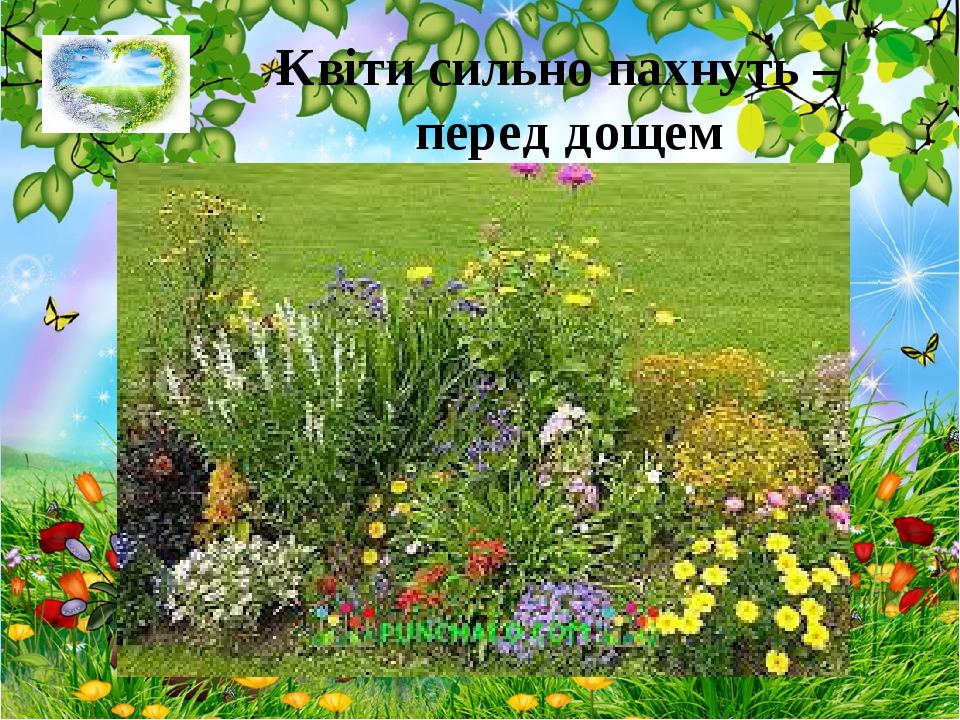 Квіти сильно пахнуть – перед дощем