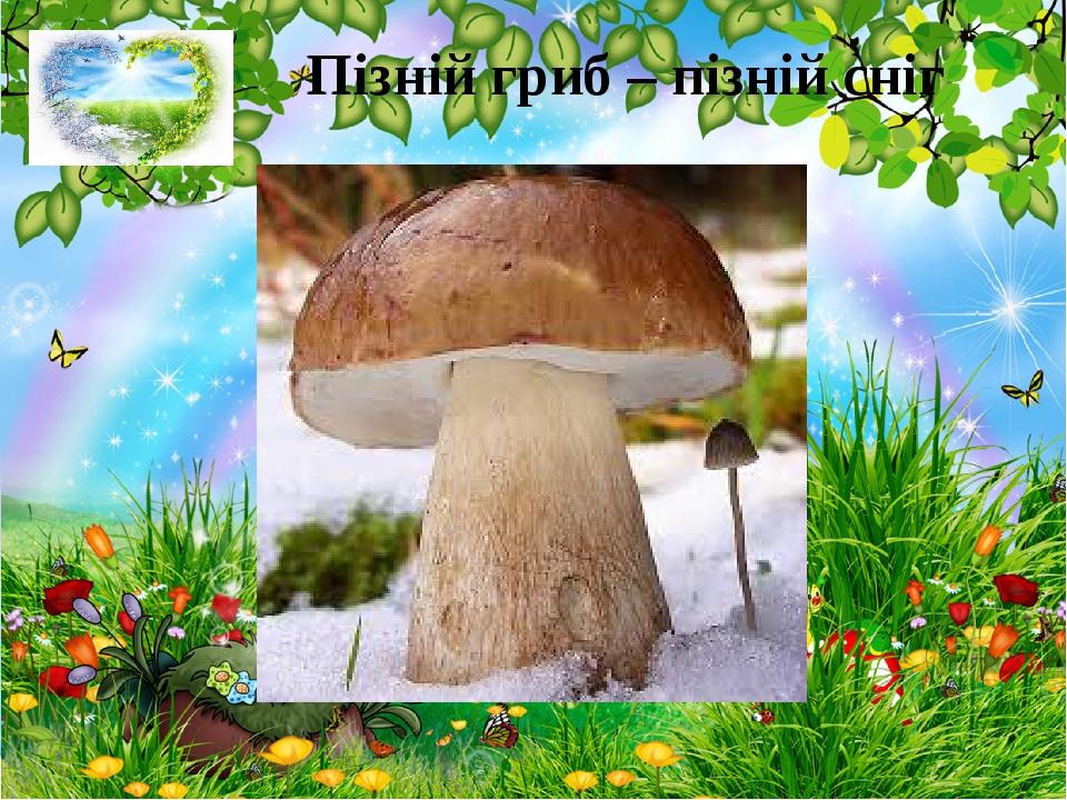 Пізній гриб – пізній сніг