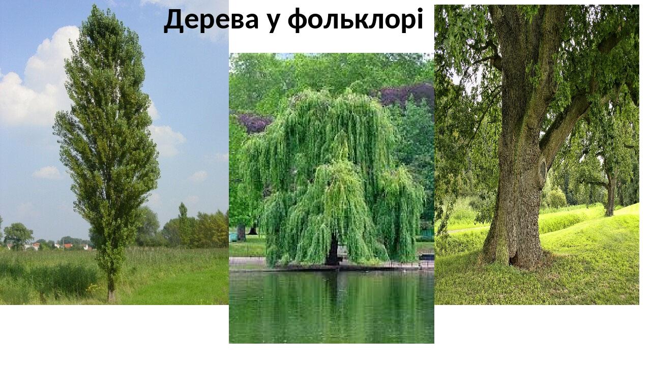 Дерева у фольклорі