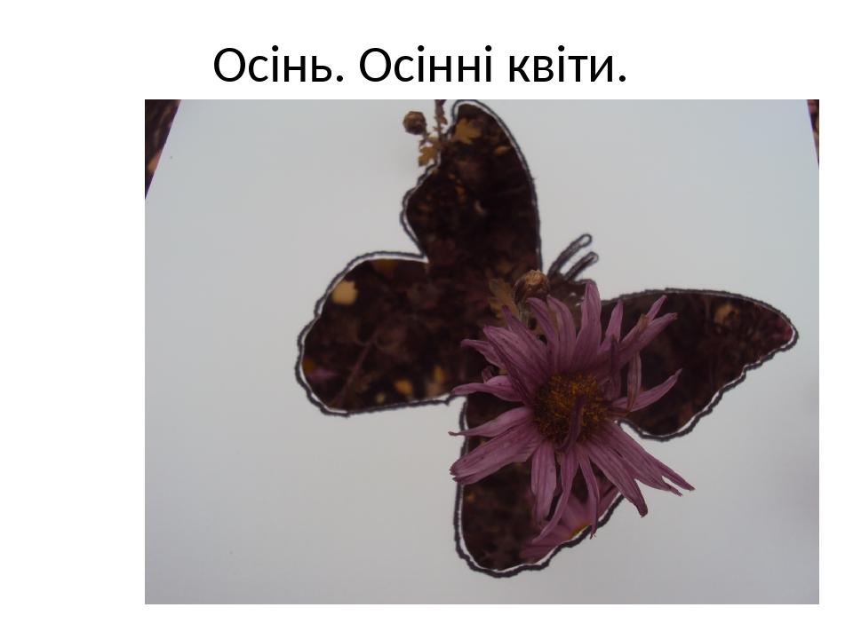 Осінь. Осінні квіти.