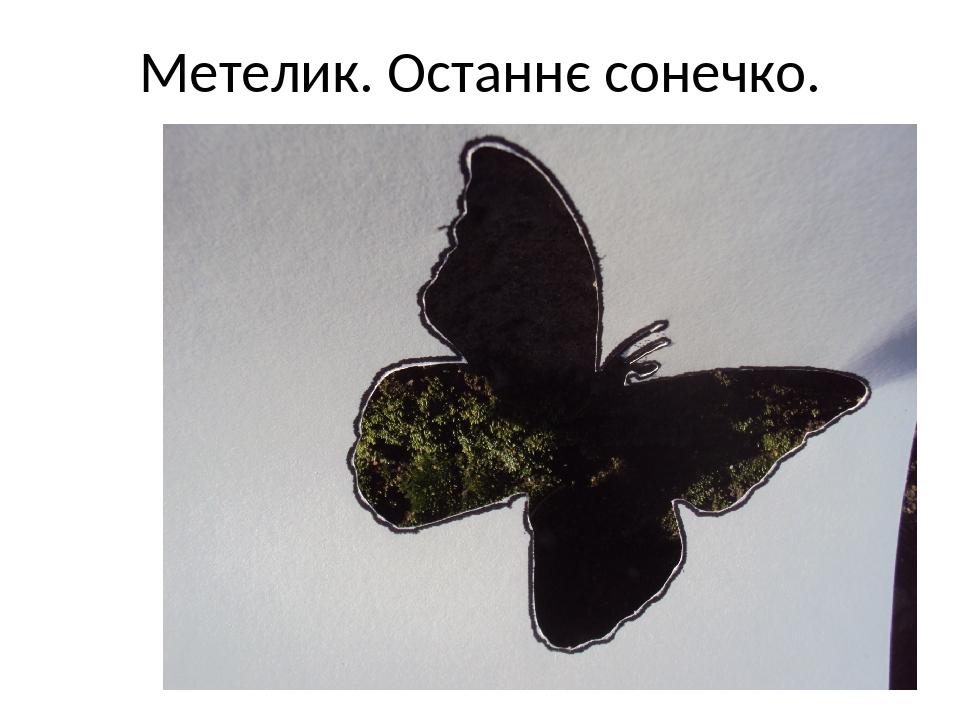 Метелик. Останнє сонечко.
