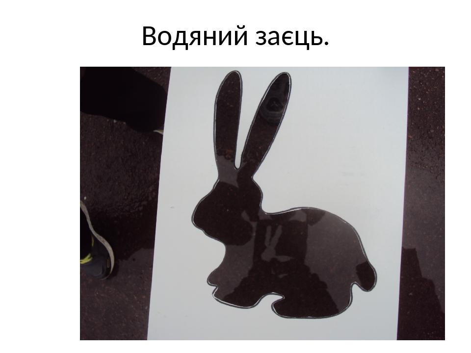 Водяний заєць.