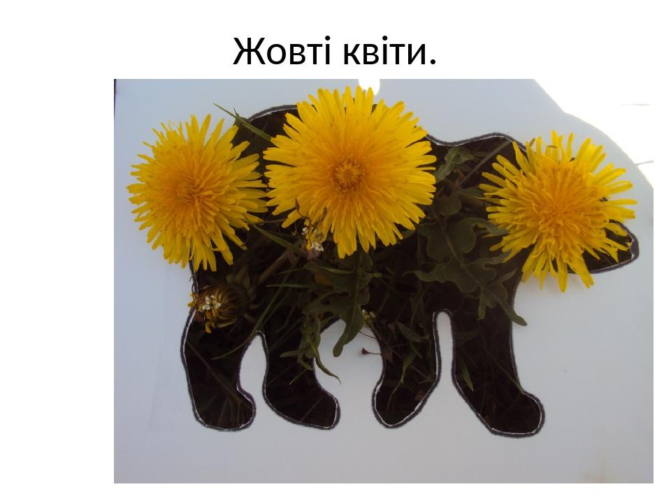 Жовті квіти.