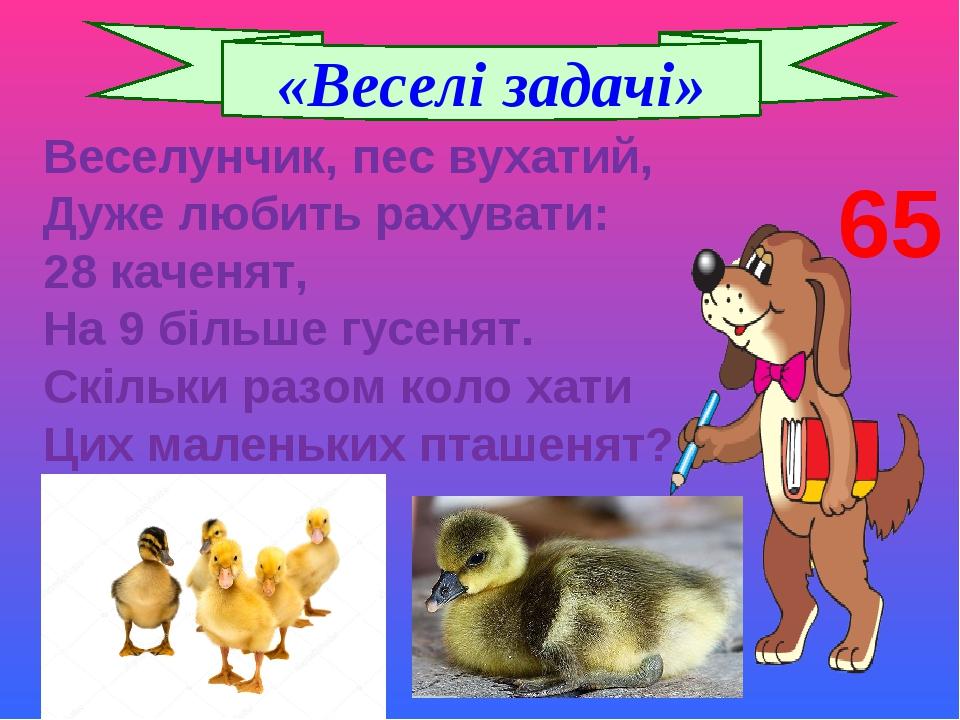 Веселунчик, пес вухатий, Дуже любить рахувати: 28 каченят, На 9 більше гусенят. Скільки разом коло хати Цих маленьких пташенят? «Веселі задачі» 65