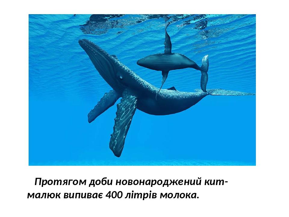 Протягом доби новонароджений кит-малюк випиває 400 літрів молока.