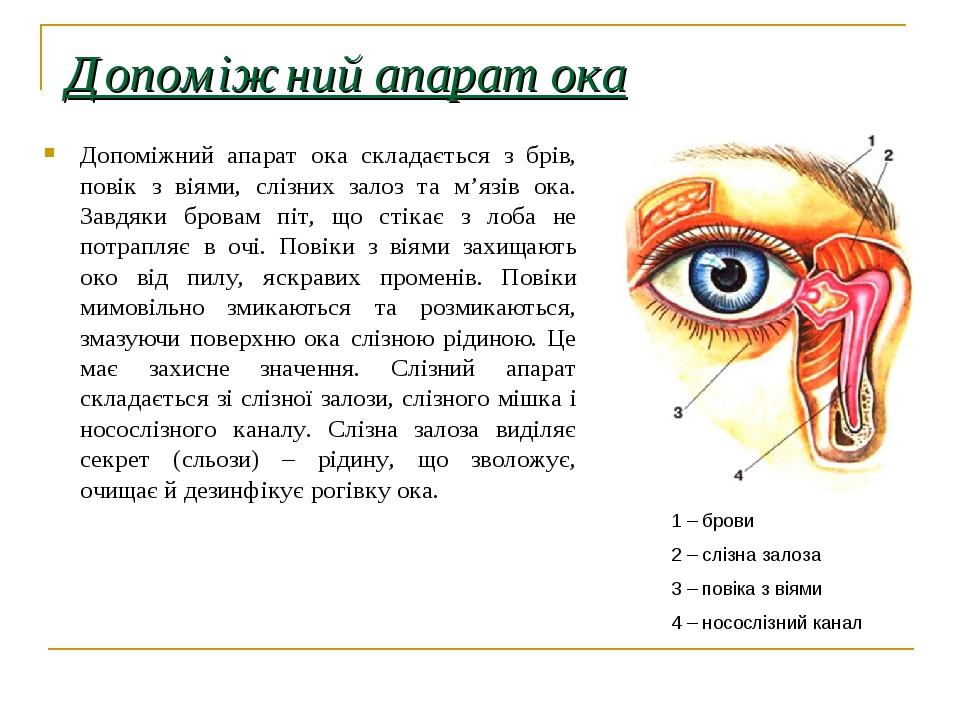 Допоміжний апарат ока Допоміжний апарат ока складається з брів, повік з віями, слізних залоз та м'язів ока. Завдяки бровам піт, що стікає з лоба не...