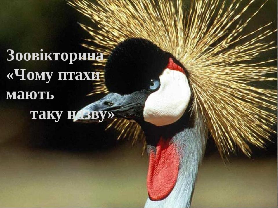 Зоовікторина «Чому птахи мають таку назву»