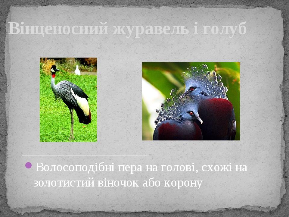 Вінценосний журавель і голуб Волосоподібні пера на голові, схожі на золотистий віночок або корону