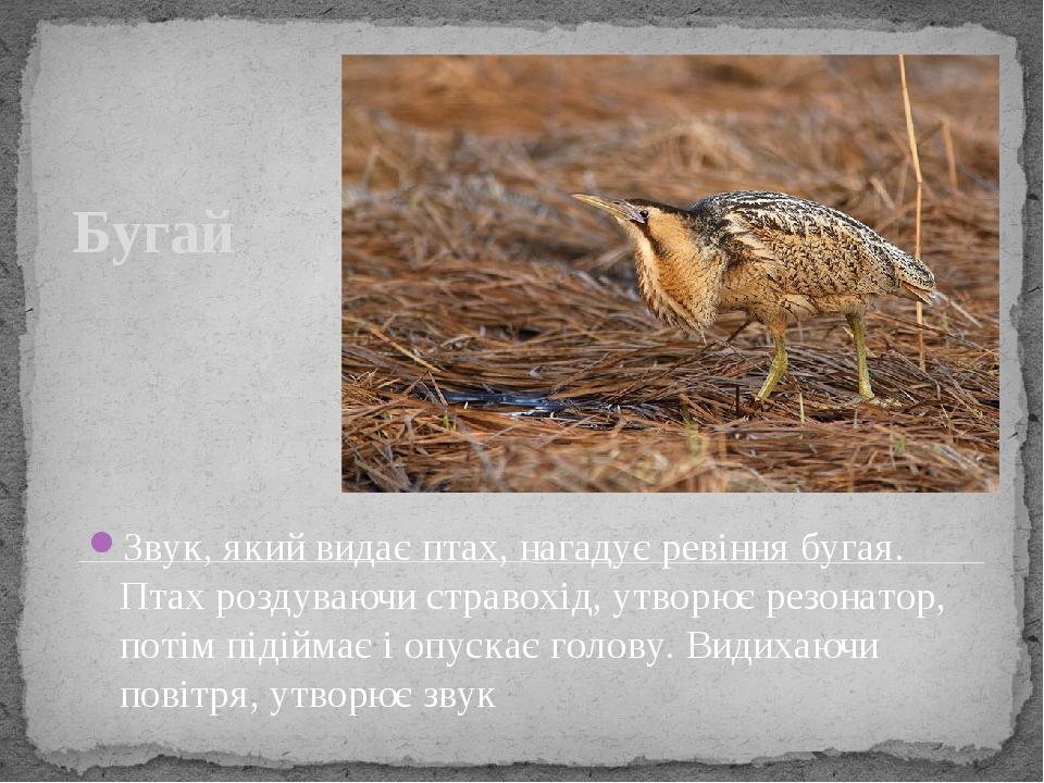 Бугай Звук, який видає птах, нагадує ревіння бугая. Птах роздуваючи стравохід, утворює резонатор, потім підіймає і опускає голову. Видихаючи повітр...