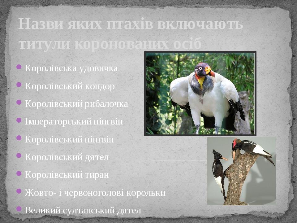 Назви яких птахів включають титули коронованих осіб Королівська удовичка Королівський кондор Королівський рибалочка Імператорський пінгвін Королівс...