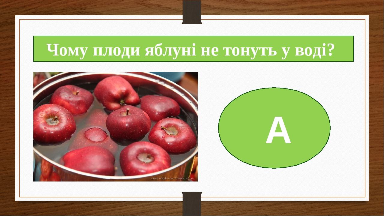 А Чому плоди яблуні не тонуть у воді?