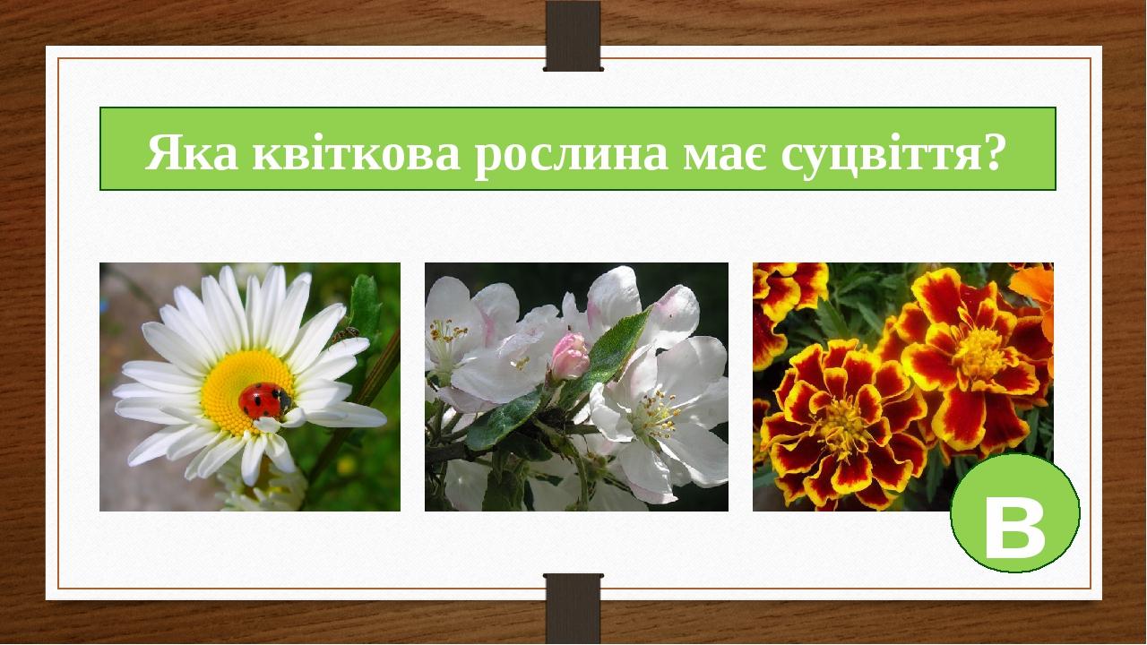 Яка квіткова рослина має суцвіття? в