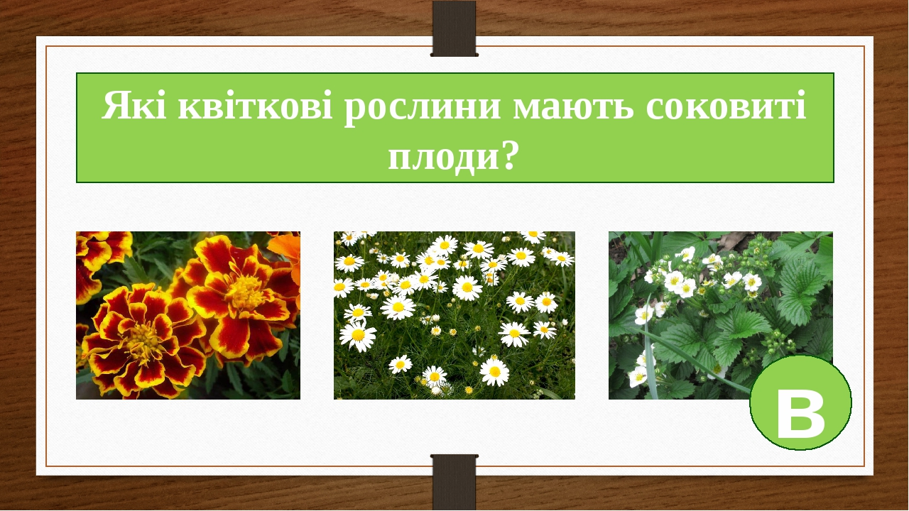 Які квіткові рослини мають соковиті плоди? в