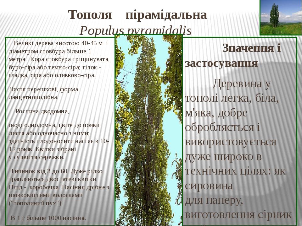 Тополя пірамідальна Populus pyramidalis Великі дерева висотою 40-45 м і діаметромстовбурабільше 1 метра.Корастовбура тріщинувата, буро-сіра аб...