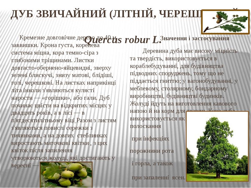 ДУБ ЗВИЧАЙНИЙ (ЛІТНІЙ, ЧЕРЕШКОВИЙ) Quercus robur L. Кремезне довговічне дерево до 40 м заввишки. Крона густа, коренева система міцна, кора темно-сі...